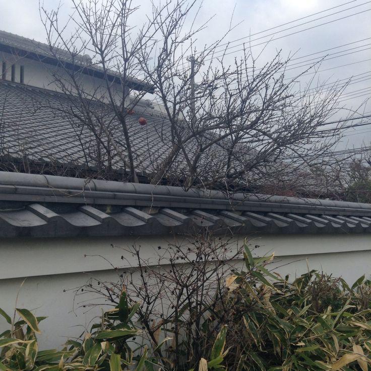 #屋根瓦#瓦#瓦屋根 #日本#日本家屋#和風建築 #枝ぶり#tiledroof#Japan#japanesearchitecture#winter#branch