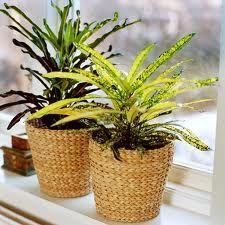 Which to choose flowers for the living room? Click on the picture /////  Jakie wybrać kwiaty do pokoju dziennego? Kliknij w zdjęcie