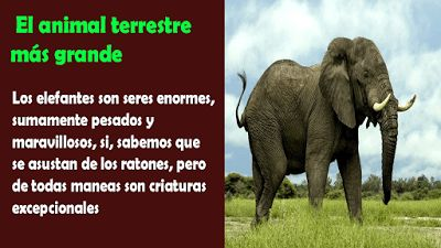 Los animales mas grandes del mundo - en su especie - Imagenes Poemax