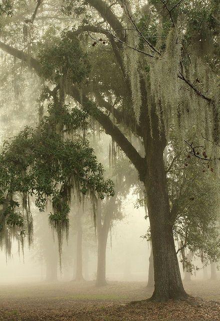 This is very mystical to me.....Spanish Moss, New Orleans, Louisiana photo via amanda