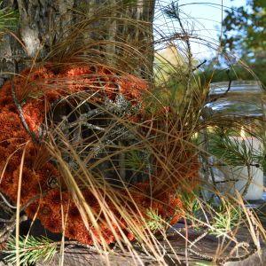 En krans av oranga blommor, tallkvistar och gräs