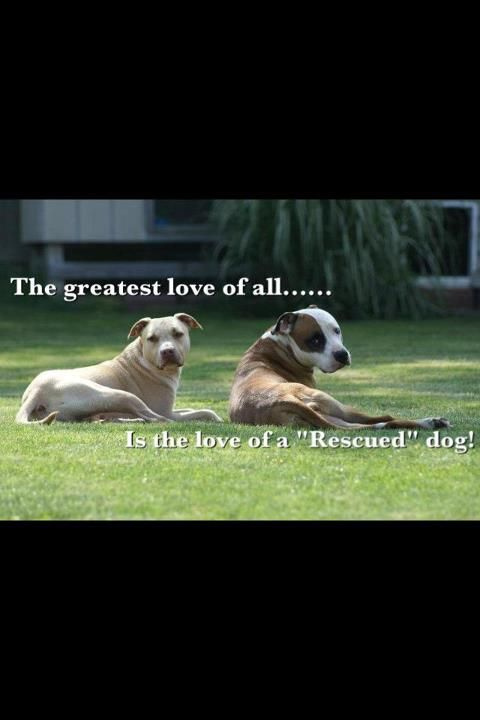 greatest love of all.....the love of a rescued dog