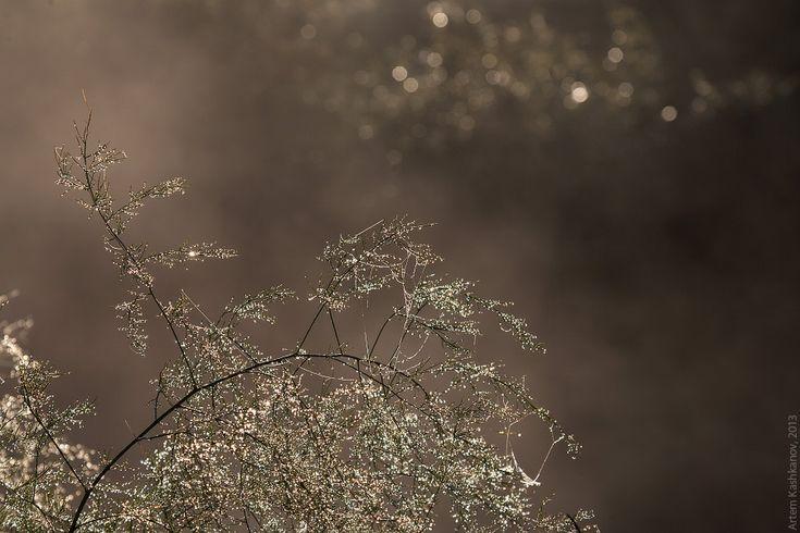 Роса на траве - Красивые летние фотографии