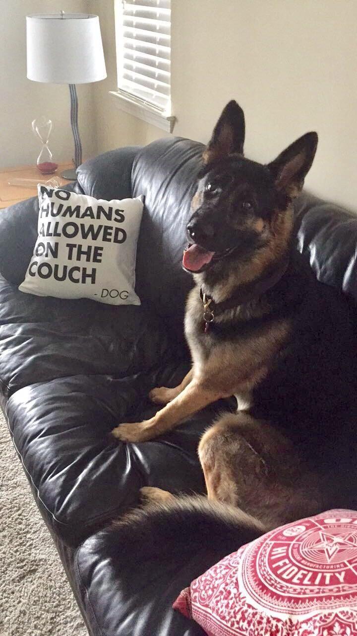He's proud of his pillow   http://ift.tt/2plRRK6 via /r/dogpictures http://ift.tt/2pMRsBY  #lovabledogsaroundtheworld