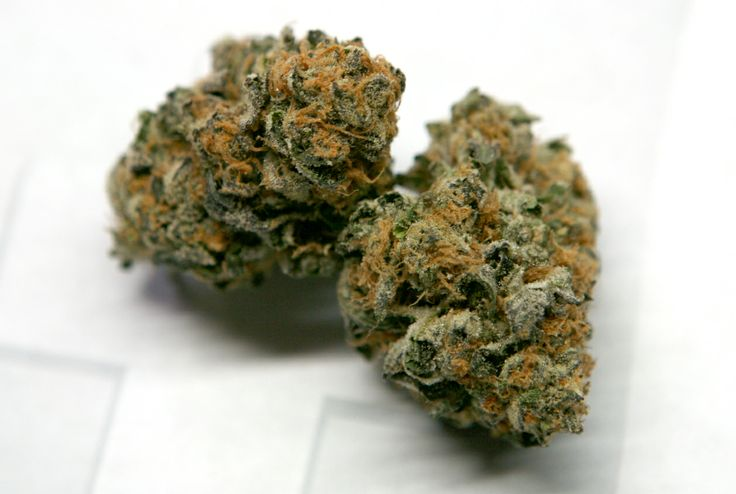 GIRL SCOUT COOKIES  Indica Dominant Hybrid  Genetics: OG Kush x Cherry Pie (Durban Poison x Grand Daddy Purple)  Green Shield Medical Marijuana Delivery Los Angeles I gshield.org I 1-800-2inhale