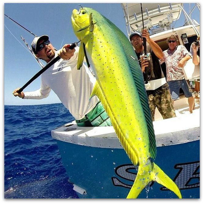 1649 best deep sea fishing images on pinterest deep sea for Best deep sea fishing in florida