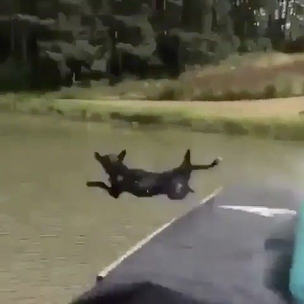@blackjaguarwhitetiger: Even though this was an accident the Dog is perfect and its a funny vid. You c