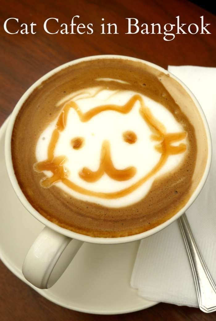 Cat Cafes in Bangkok,Thailand. Where to find the best cats and the best coffee....