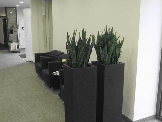 17 besten Bürobegrünung Bilder auf Pinterest Blumen, Pflanzen - pflanzen deko wohnzimmer