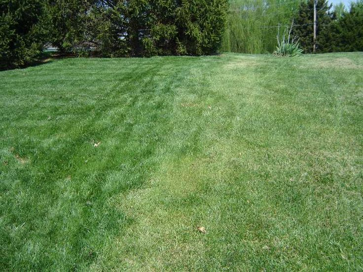 Avoid traffic on your lawn if possible when the ground is wet or frozen in winter. Here are some tips to improve your lawn in late winter/early spring - http://davesgarden.com/guides/articles/view/4860/