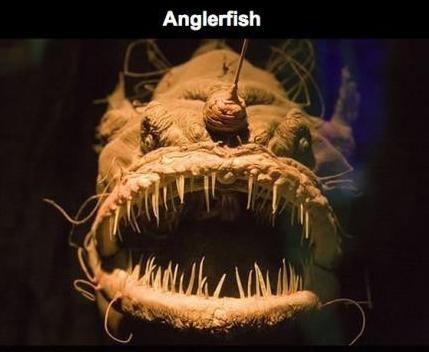 O que registraram no ponto mais fundo do oceano é absolutamente assustador
