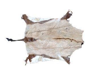 Oryx skinn fra Sør-Afrika