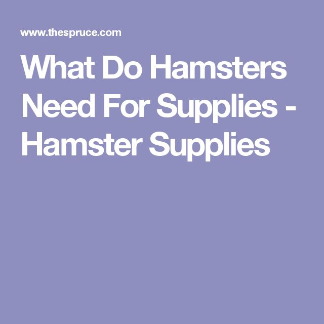 What Do Hamsters Need For Supplies - Hamster Supplies