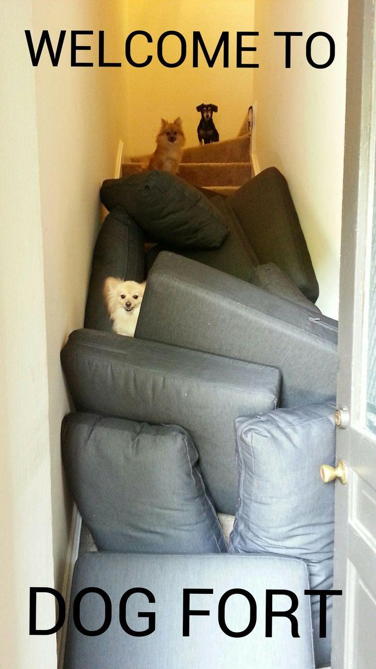Dog Fort - Imgur