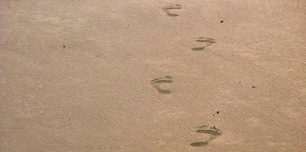 Lifting our heads up & out of the sand can reveal much, but how far are we willing to see?  #science #footprints #sand #firstimpressions #UnimedLiving