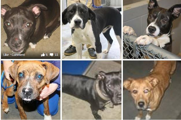 Rescue Shelters Dogs Greenville Sc