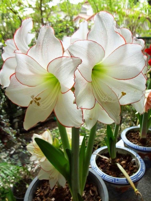 Flowers Gardens: FLORES, FRUTAS......