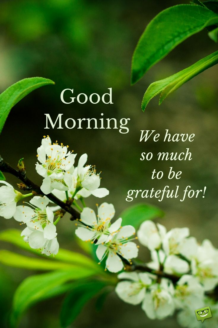 Quotes On Morning Wishes: 524 Best Goodmorning Quotes Images On Pinterest