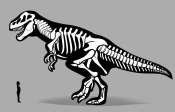 How to Draw a Dinosaur Skeleton, Dinosaur Skeleton, Step by Step, Dinosaurs, Animals, FREE Online Drawing Tutorial, Added by Dawn, January 20, 2012, 5:41:30 pm