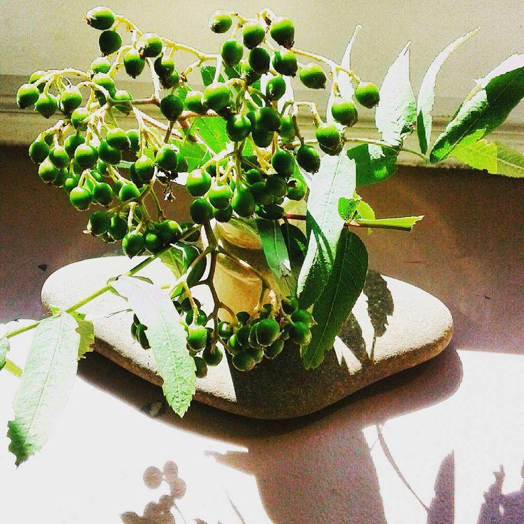 Gra światła i cienia#bukiecik#zielony#kamień#słońce #cień #bouquet #rowan #green #sun #shadow #stone