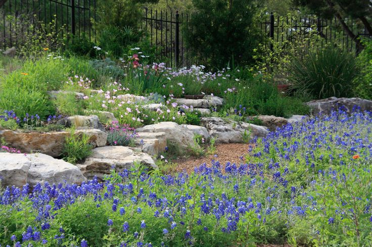 17 best images about austin gardening rock gardens on for Garden design xeriscape