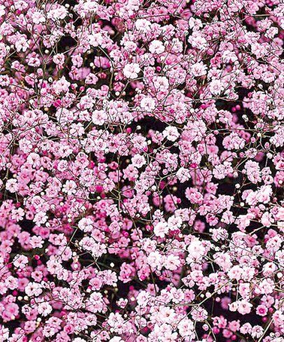 die 25 besten ideen zu rosa b ume auf pinterest. Black Bedroom Furniture Sets. Home Design Ideas