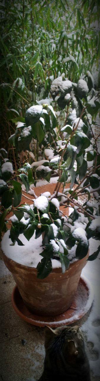 La prima neve di André (4 febbraio 2012)