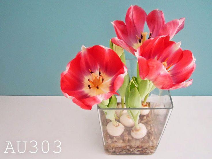 les 25 meilleures id 233 es concernant bulbe de tulipe sur planter tulipes bulbes et
