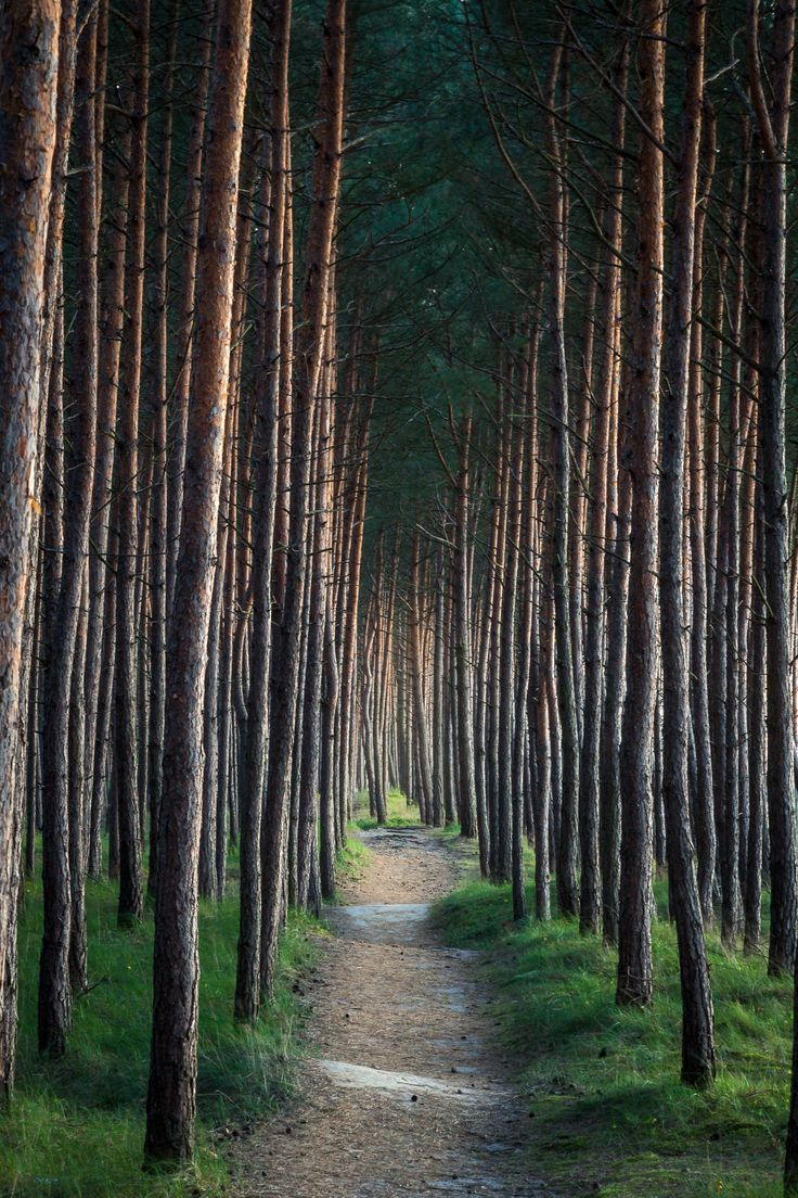 ~~Follow the Path | into the pine forest | by krilrikur~~