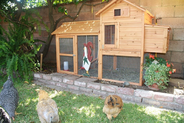 1000 images about chickens on pinterest the chicken a for Fancy chicken coops for sale