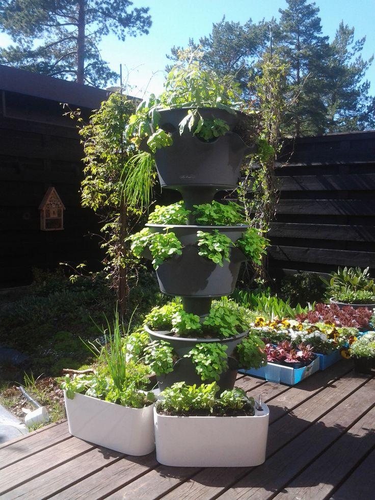 Nyt on täydellinen aika hankkia yrttitorni! Kaikki taimemme ovat täysikokoisia ja pääset heti nauttimaan yrteistä, salaateista....