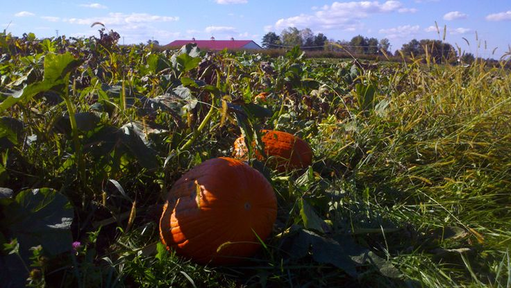 Pumpkin Patch at Lynd Fruit Farm