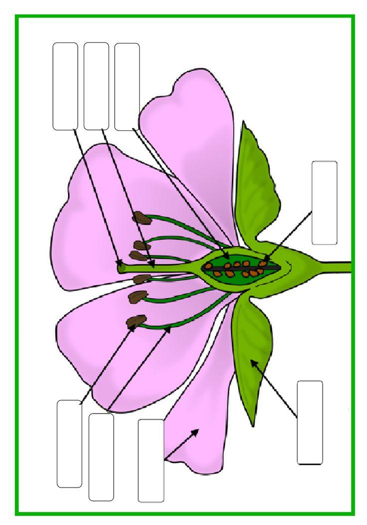 delen van een bloem invulblad
