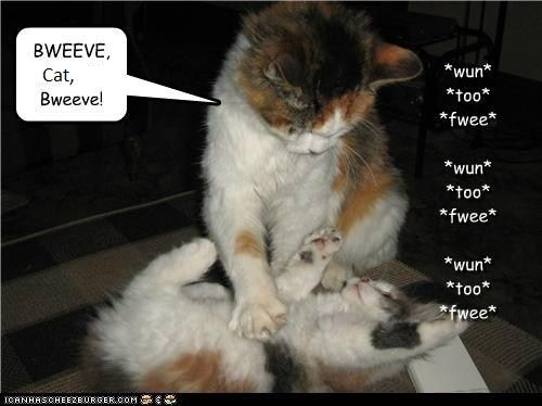best way to get rid of fleas on cats
