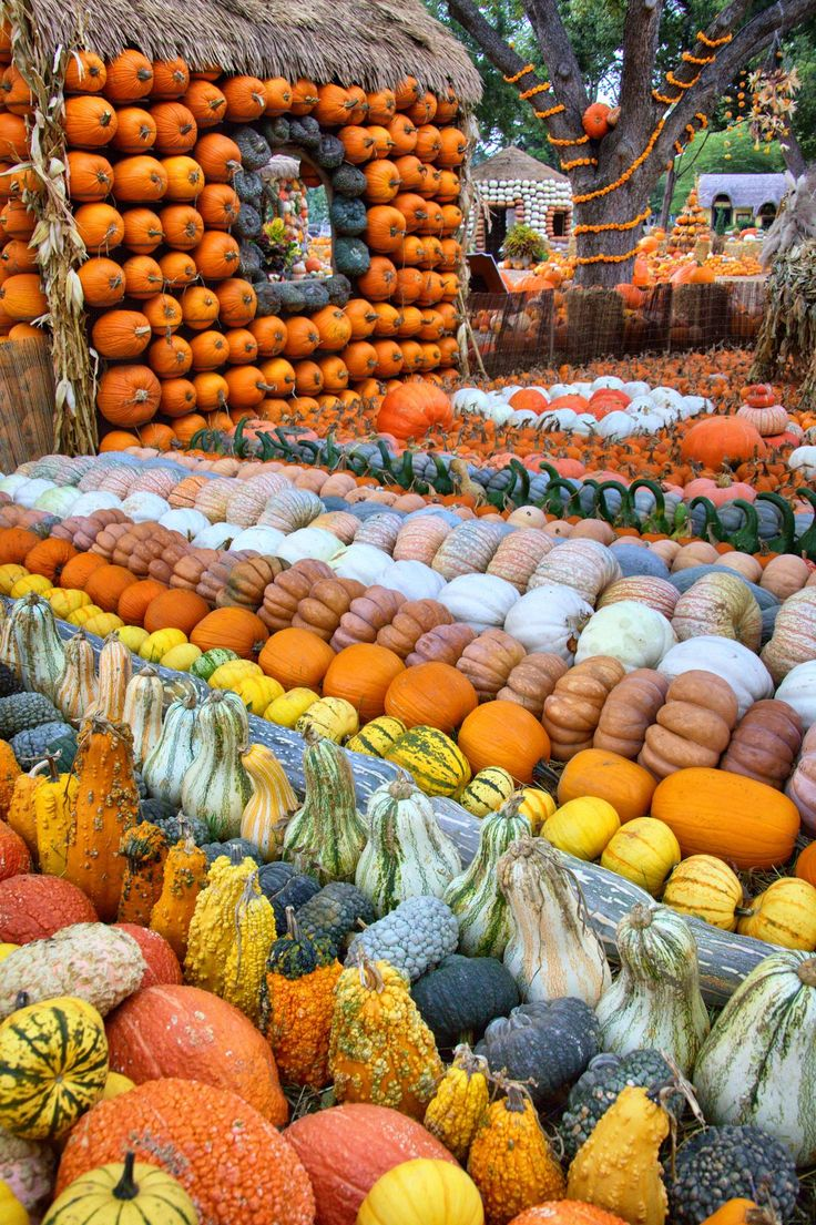 Pumpkin Village at the Dallas Arboretum and Botanical Garden #dallasarboretum #pumpkin #autumn