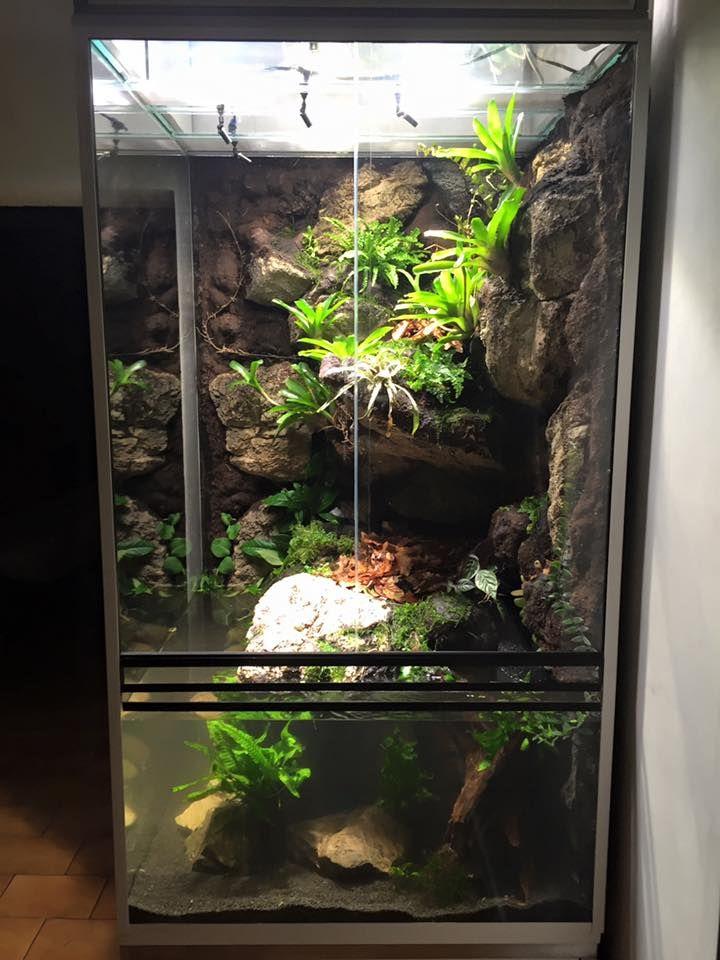 die besten 25 cham leon terrarium ideen auf pinterest wasserschildkr ten aquarium schlangen. Black Bedroom Furniture Sets. Home Design Ideas
