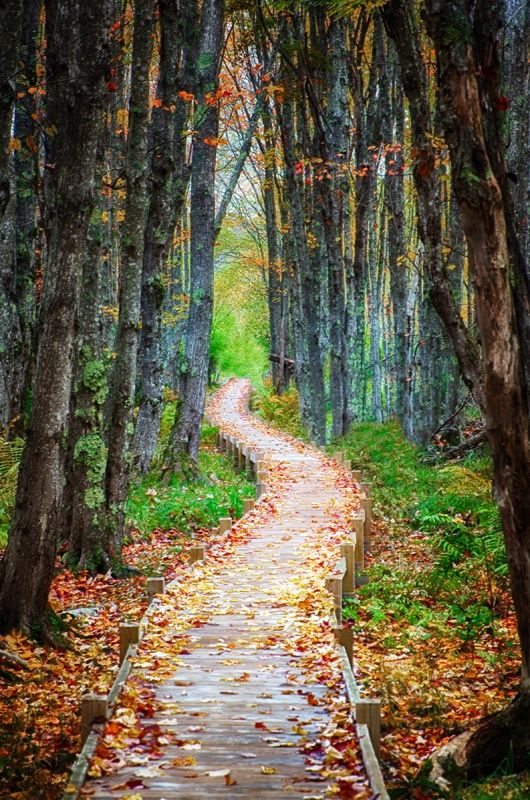 A Walk Through Autumn, Acadia National Park, Maine. I've been there in the Fall, it really is breathtakingly beautiful.