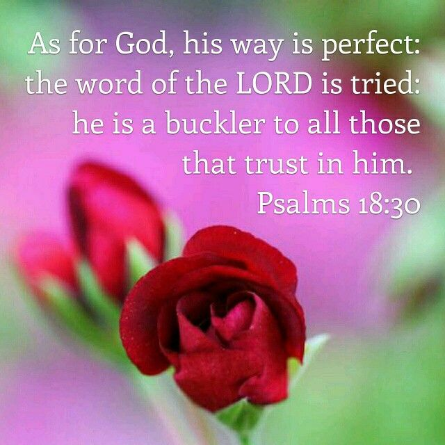 gods wisdom according to hebrews and christian scriptures Bible verses about will of god if any of you lacks wisdom, let him ask god because the spirit intercedes for the saints according to the will of god.