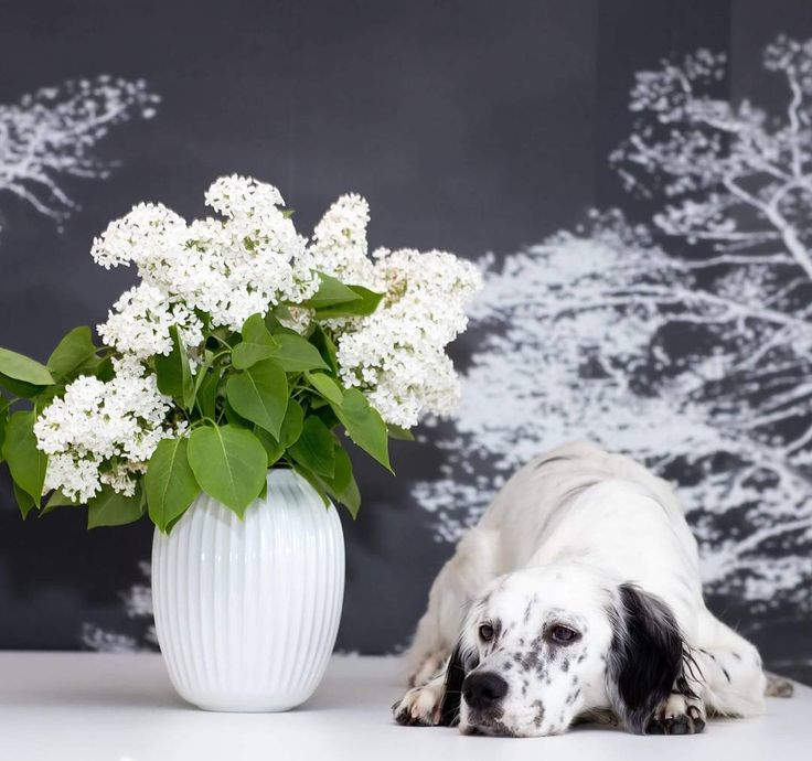 English setter Nikka and a kahler vase with flowers