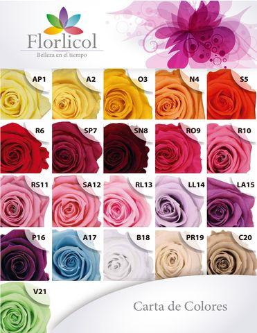 FLORLICOL Colombian Preserved Flowers,Flores Preservadas de Exportación - Otras Ventas - Todo Colombia
