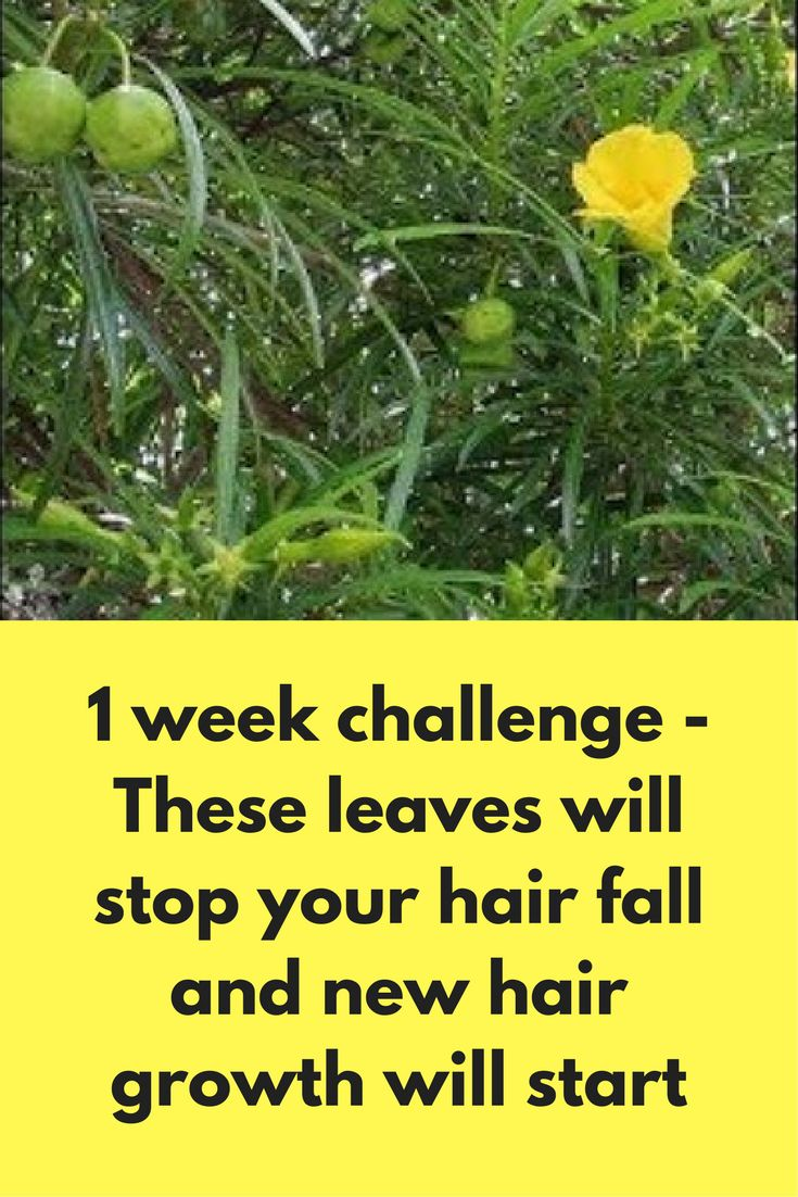 1 week challenge - These leaves will stop your hair fall and new hair growth will start For this remedy you will need Kaner leaves – 60-70 grams Curry leaves – 15-20 Dry amla – 1 handful Coconut oil or Olive oil – 1 Litre Directions to follow: First wash these kaner and curry leaves and dry them Now cut these leaves and add them with oil Put this oil on low …