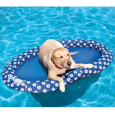 """""""The Doggy Pool Float"""" - This is the pool float that lets a dog lounge on the water as comfortably as if on its favorite bed. This float is made from a tough, fabric-covered inflatable 14-gauge PVC ring with a bed of heavy-duty 400 denier polyester fabric. Patented steel-reinforced construction springs the float open easily and allows it to be folded to less than 1/10 its inflated size in seconds. This dog seems to like it!"""