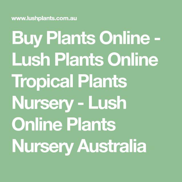 Buy Plants Online - Lush Plants Online Tropical Plants Nursery - Lush Online Plants Nursery Australia