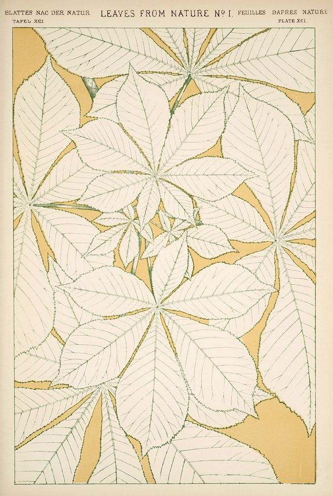 Jones, Owen, from The grammar of ornament;  Leaves and flowers from nature. Plates 91-100]