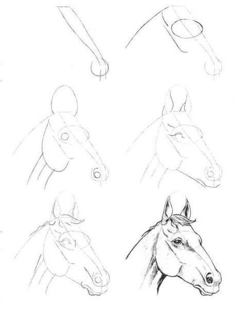 How to draw a horse                                                                                                                                                                                 More