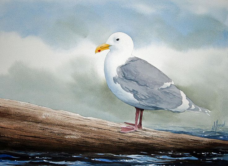 Seagull Painting  - James Williamson