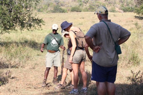 Our lead guide Zondi explaining another fascinating aspect of the wildlife of Africa - like the African palm nut that only grows through veld fire, or in a pile of elephant poop! (obviously after being eaten, it comes out the 'other side').