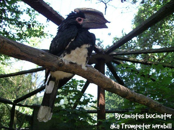 Tropical Island Beach Ambience Sound: 41 Best Images About Hornbills On Pinterest