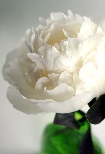 White flowers are the most beautiful!...