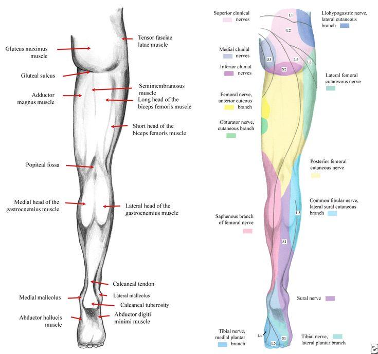 Lower Extremity Sensory Nerves | Lower Limb Anatomy